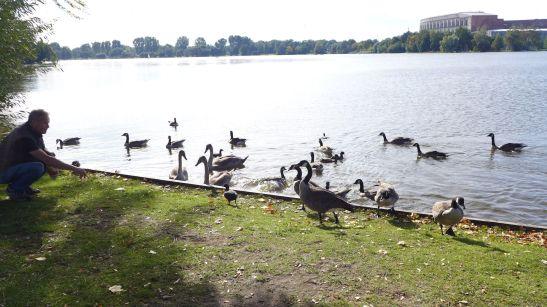 湖邊餵雁的人。