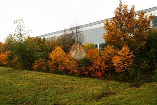工廠後面的樹,全都變紅了。